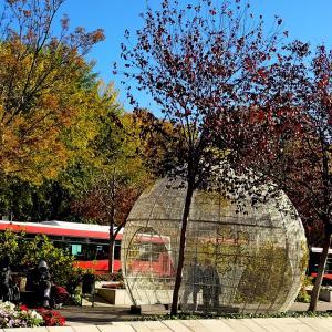 大きなツリーみっけ。Plaza de bib-rambla