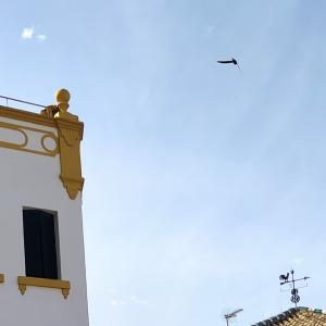 セントロ・デ・サルーの帰り道に見つけた未確認飛行物体