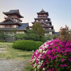 伏見城の躑躅、藤、青もみじ
