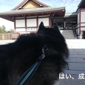 成田から香取へ