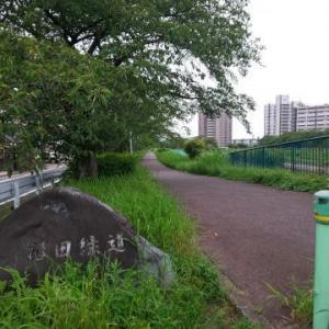 ★久しぶりの天白川散歩-夏の花とともに★