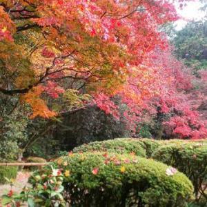 ★京都の紅葉-真紅と鮮やかな緑の詩仙堂★