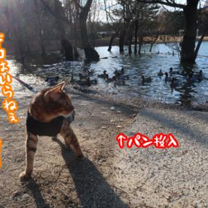 お散歩初め
