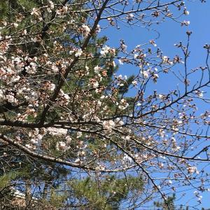 春の始まりにうずうず!(^^)
