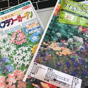 枯れ庭に花を咲かせましょう(^^)/