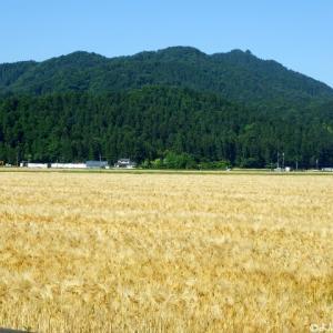 文殊山(365m) 273回目 大正寺コース