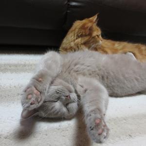 両手を上げて寝ています♪