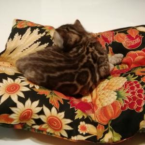 子猫のお布団♪