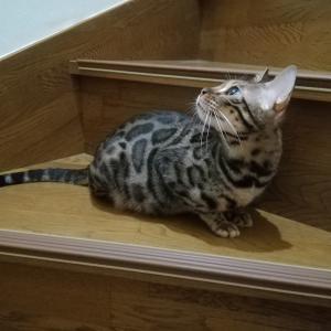 階段で待ってます♪