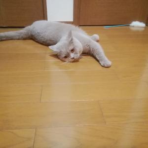 床にスリスリ♪