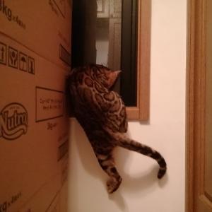 窓枠へジャンプ♪