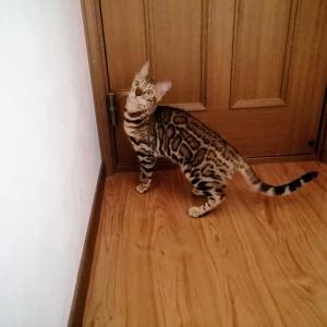 手前に開くドアはまだ無理です♪
