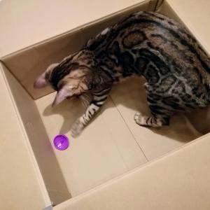 箱の中に持ってきました♪
