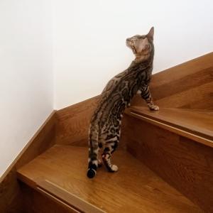 階段の窓に♪