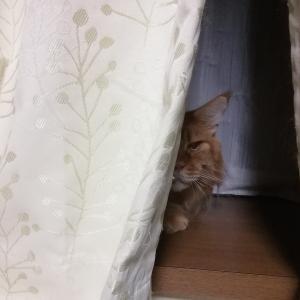 出窓で待ってくれています♪
