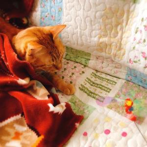 遊びたいけど眠いネコチャン
