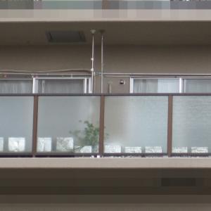 緑のカーテン 2019 ~ 定植170日目 ~
