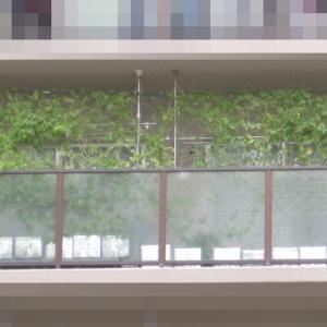 緑のカーテン 2020 ~ 定植180日目 ~