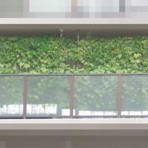 緑のカーテン 2021 ~ 定植150日目 ~