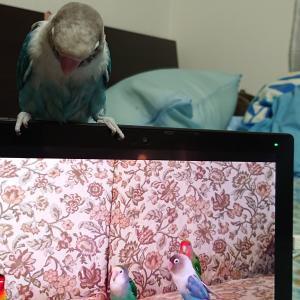 タブレットの中の鳥