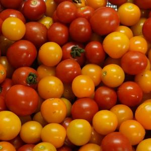 フルーツトマトのようなもの