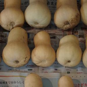 謎の野菜?