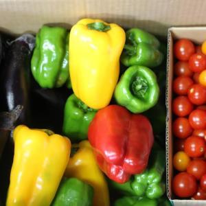 特選無農薬野菜セット