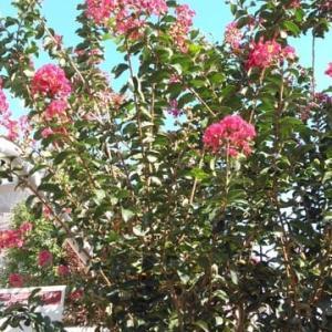 ワクチン接種2回目の帰り&家の小庭の花