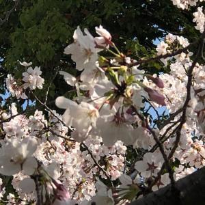 春休みアレコレ③〜それぞれの毎日