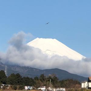 冠雪の富士を探して