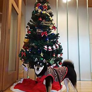 Merry Chamasmas 8
