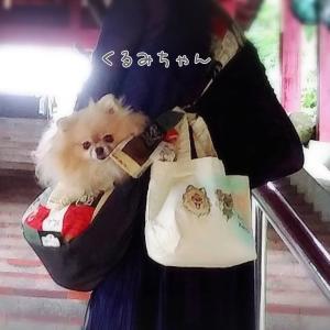 くるみちゃんのお写真ありがとうございます☆2020.08.01①