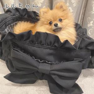 ルルちゃんのお写真ありがとうございます☆2021.04.28①