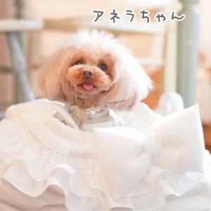 アネラちゃんのお写真ありがとうございます☆2021.05.06①