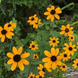 GreenSnap;その5 四季の森県立公園の花たち
