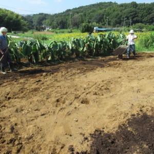 8月の主な農作業