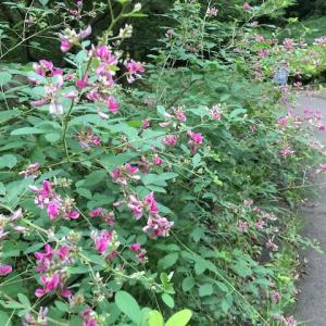 四季の森公園の花