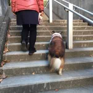 階段を歩けた