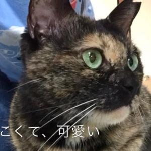 山科シェルターの大人猫たち 2020.7.11 撮影