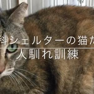 山科シェルターの猫たち 人馴れ訓練