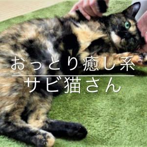 山科シェルター おっとり癒し系サビ猫さん ~子猫たちからも慕われています~