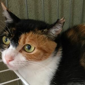 山科シェルターの猫たち