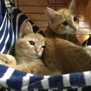 山科シェルターの子猫たち その1