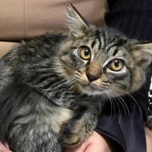 フサフサしっぽの可愛い子猫 新入り保護猫はお膝の上でナデナデされて、気持ち良さそうです