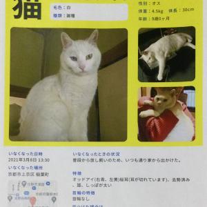 【拡散希望】猫を探しています!!