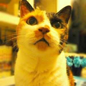 長生き猫さん25歳('ω')