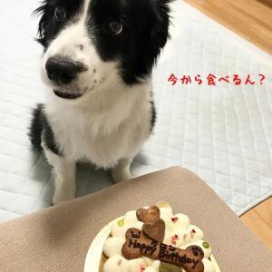 せっかくの誕生日ケーキが台無し…
