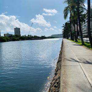 アラワイ運河で工事が始まりいつか水が綺麗に変わるかも。