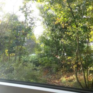 庭を眺めて アイロンかけ。