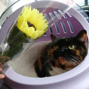 お花をもらいました